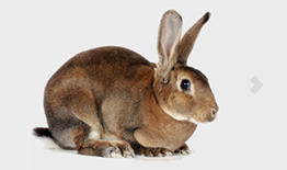 Small Pets Banner